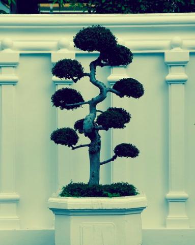 bonsai2